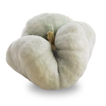CUCURBITA maxima Triamble