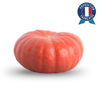 CUCURBITA pepo Rouge d Etampes D30 MM